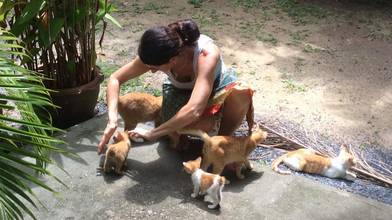 Pet Healing Treatments in Phuket